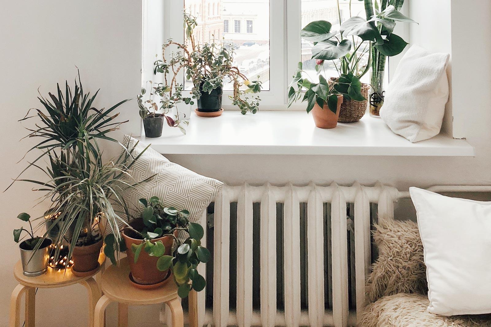 termosifone in ghisa sotto a una finestra con piante